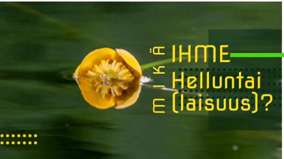 mikc384-helluntai-.png